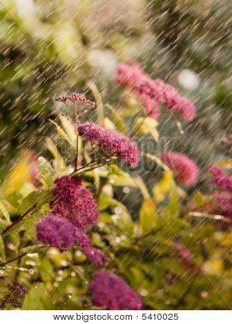 Flowers Sprayed Drencher