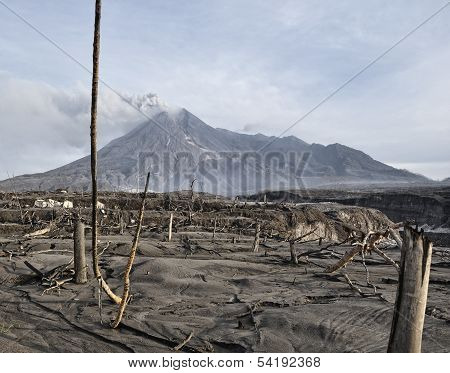 Forest Damaged by Natural Disaster