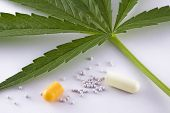 Concept of alternative medicine leaf marijuana and contents of capsule open on white background poster