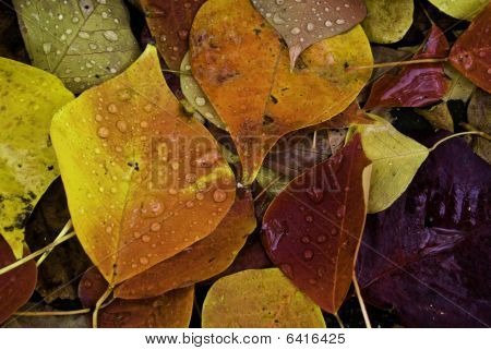 An Image Of Some Colourful Fallen Autumn Leaves