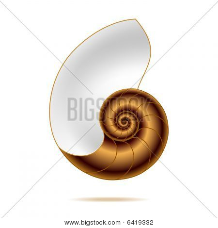 Nautilus shell. Vector illustration.
