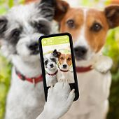 couple of dog taking a selfie together with a smartphone poster