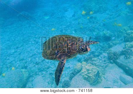 Tropical Underwater Scene - Sea Turtle