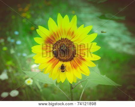 Retro Look Sunflower Flower