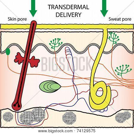 Vector scheme illustration of transdermal drugs delivery poster