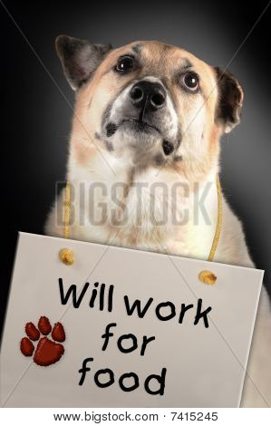 poster of This very sad dog will work for you for food.