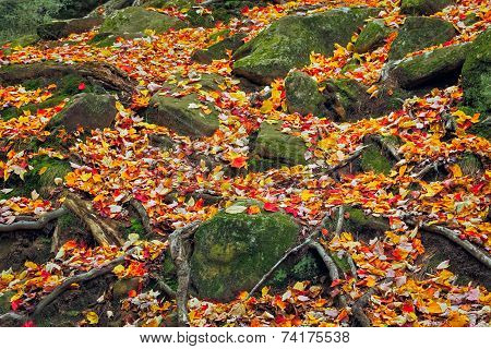 Rocks And Leaves