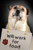 This very sad dog will work for you for food. poster
