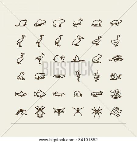 Fauna Of Fresh Reservoirs