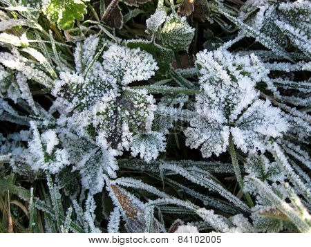 Frost At Charles Wood