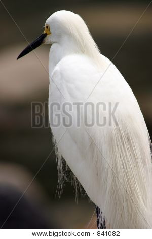 Close up of white bird standing