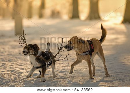 Dogs At Play In The Snow