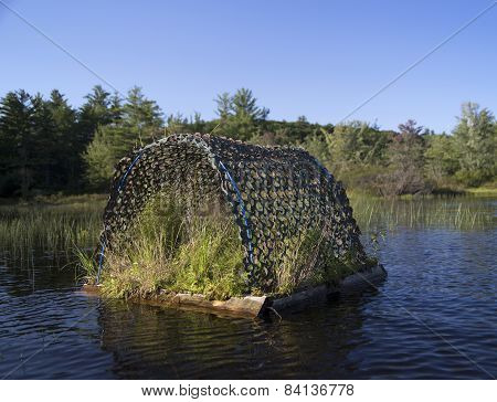 Loon nest