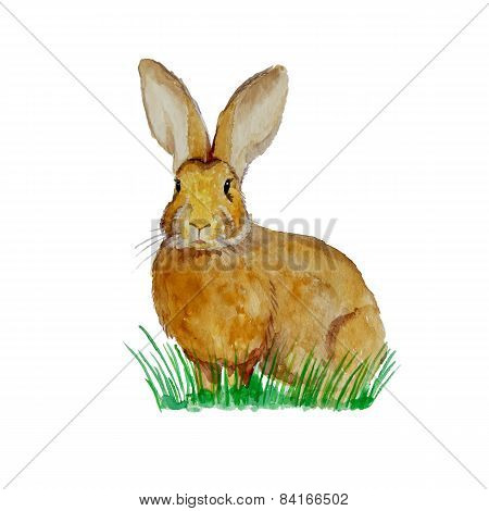 Watercolor bunny on the meadow