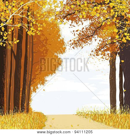 Landscape with path between autumn trees in the forest
