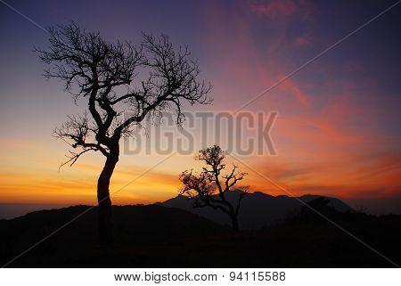 Tree in winter morning.