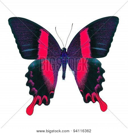 Beautiful red butterfly Majestic Green Swallowtail (Papilio blumei) in fancy color profile isolated on white background poster