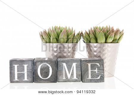 Succulent plants in silver interior flower pots at home isolated over white background
