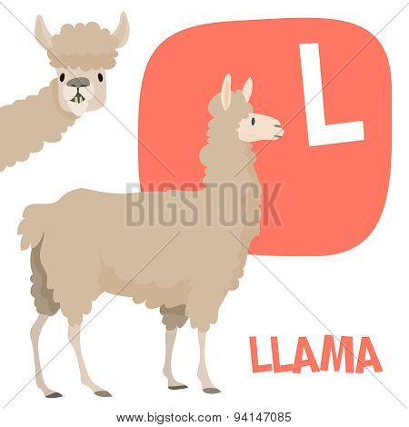 Funny cartoon animals vector alphabet letter set for kids. L is Llama