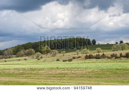 landscape picture of a daffodils glade before the storm in Harghita County Transylvania Romania poster