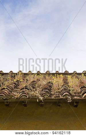 Old Abandoned Roof; Typical Tuscan Roof To Be Restored