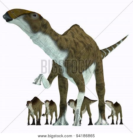 Brachylophosaurus was a herbivorous hadrosaur dinosaur that lived during the Cretaceous Period of Alberta Canada and Montana North America. poster
