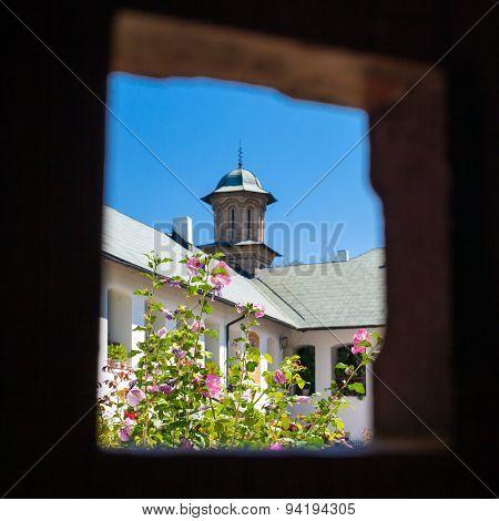 Hibiscus Flowers Inside Cozia Monastery Courtyard
