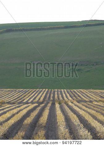 Field Furrows Rural Landscape