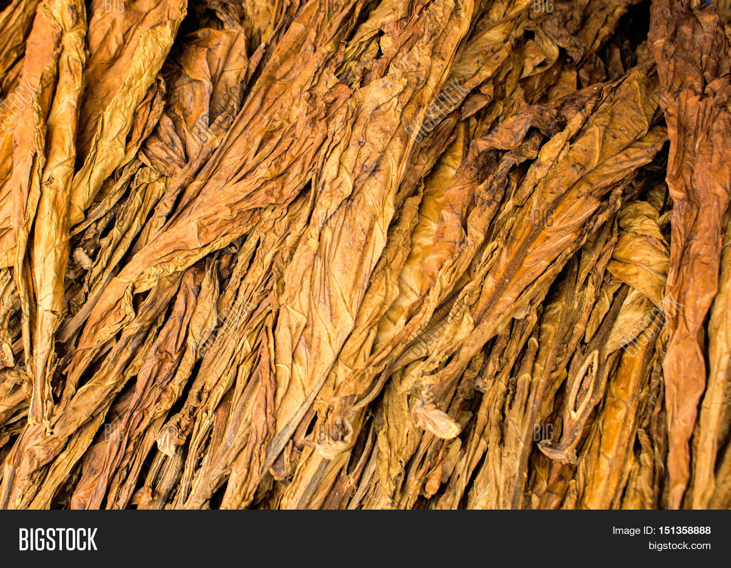 the feasibility of dried tobacco leaves The physical and chemical nature of the tobacco leaf stems are such that it is desirable to remove the stems before the tobacco leaves are shredded into a form suitable for use in cigarettes and like smoking products.