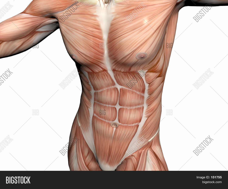 Anatomy Man Muscular Image Photo Free Trial Bigstock