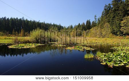Beaver Lake in Stanley Park Vancouver British Columbia Canada