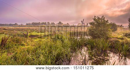 Swamp River Landscape