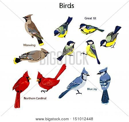 big set birds. birds flying, bird silhouette, bird vector.