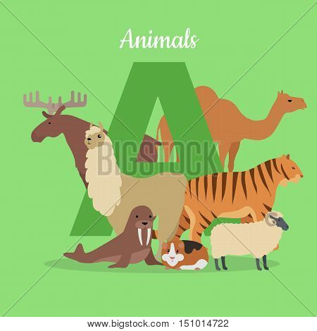 Animal alphabet vector. Flat style. ABC with animals. Camel, elk, llama, tiger, walrus, guinea pig, sheep standing on green background, letter A behind. For children s books, textbooks illustrating