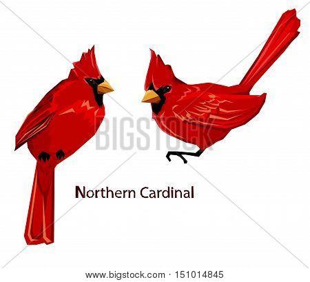 Northern cardinal, Red Cardinal bird, vector illustration bird, wildlife.