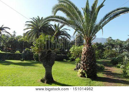 Canarian island Tenerife beauty of Canarias Spain