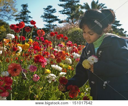 Child is picking flowers from garden in the afternoon