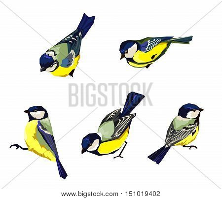Great tit vector illustration, birds set vector. Great tit birds set. Vector illustration of great tit. Cute bird, Great tit isolated on white.