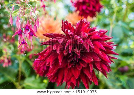red beautiful flower growing in the green garden