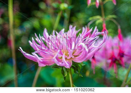 pink beautiful flower growing in the green garden