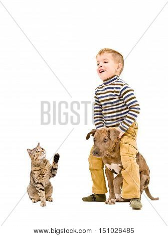 Cheerful child playing with a puppy Pitbull and cat isolated on white background