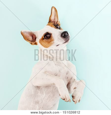 Cute dog. Lying pet. Copy space