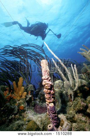 St. Kitts Diver