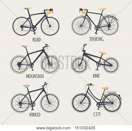 Vector set of bicycles in flat style. Guide of bike types. Poster with racing/ road bike touring bike mountain bike bmx hybrid and city bike.
