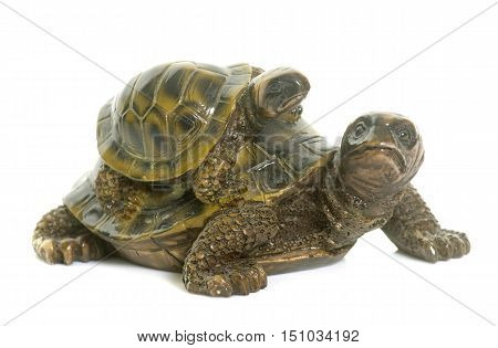 ceramics turtle in front of white background