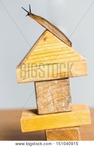 Wooden House With Slug