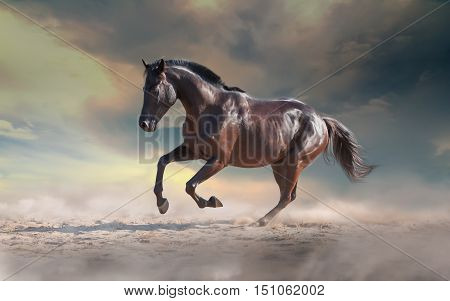 Black horse galloping on the sand on the dramatic sky background with the dust