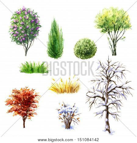 Hand drawn watercolor illustration. Set of trees and bushes during different seasons. Various plants isolated on white.