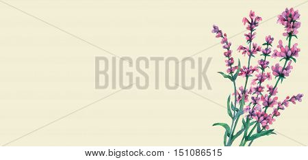 Bouquet of lavender. Watercolor hand painting illustration on isolate light green background.