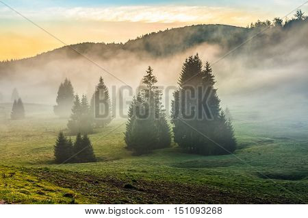 Foggy Morning In Conifer Forests At Sunset